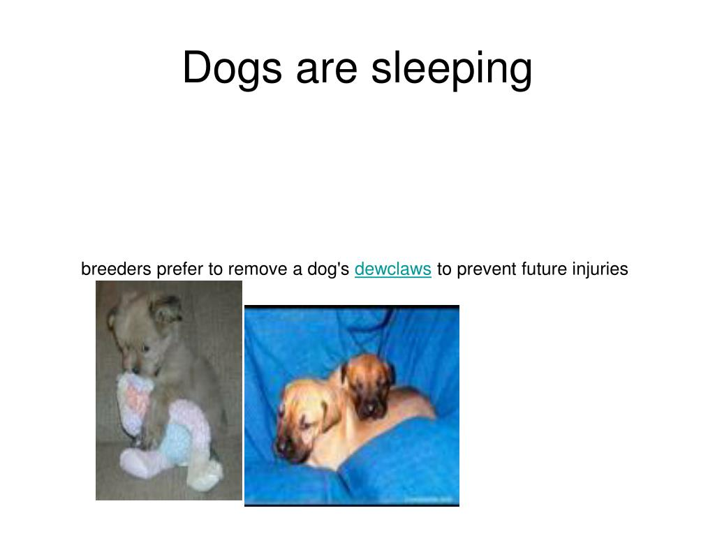 Dogs are sleeping