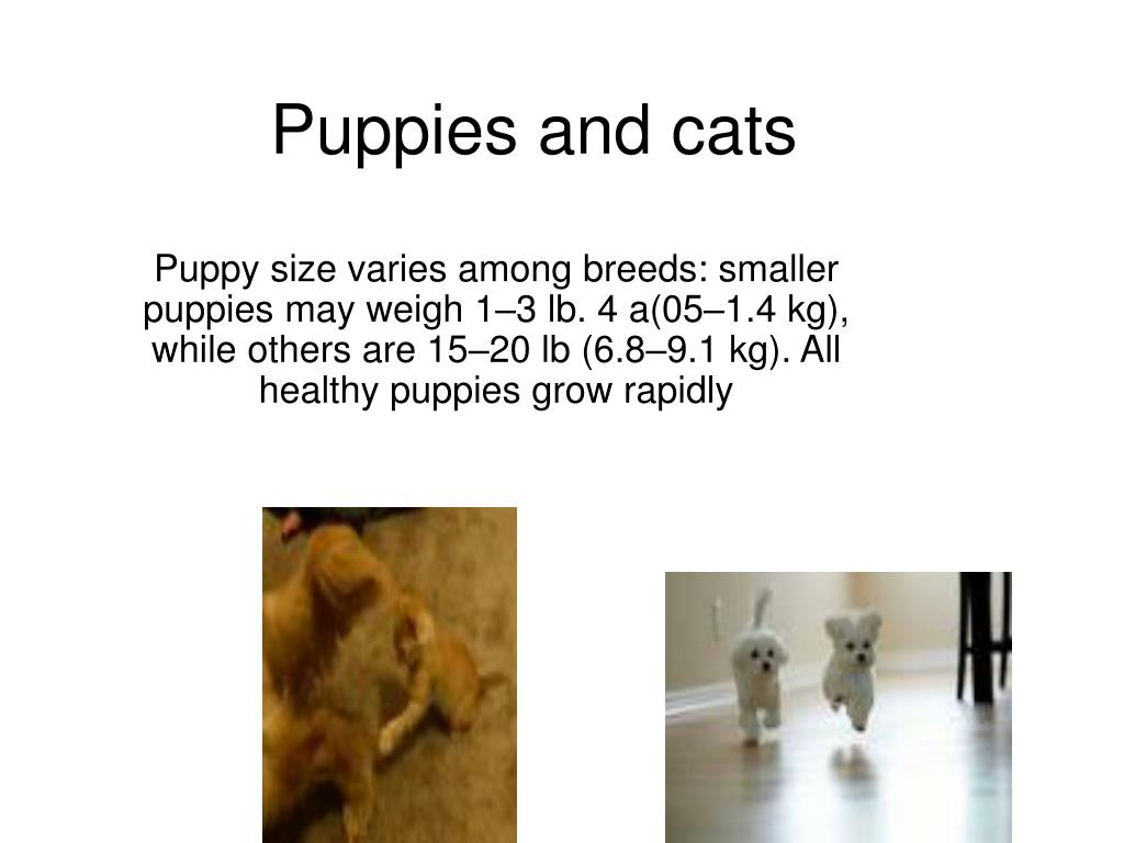 Puppies and cats