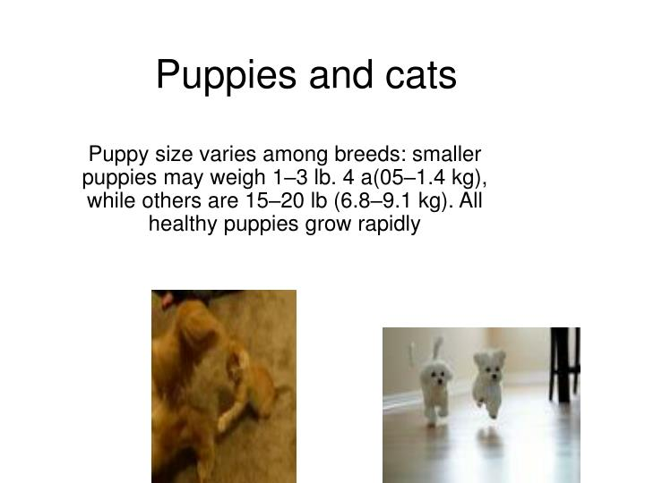Puppies and cats l.jpg