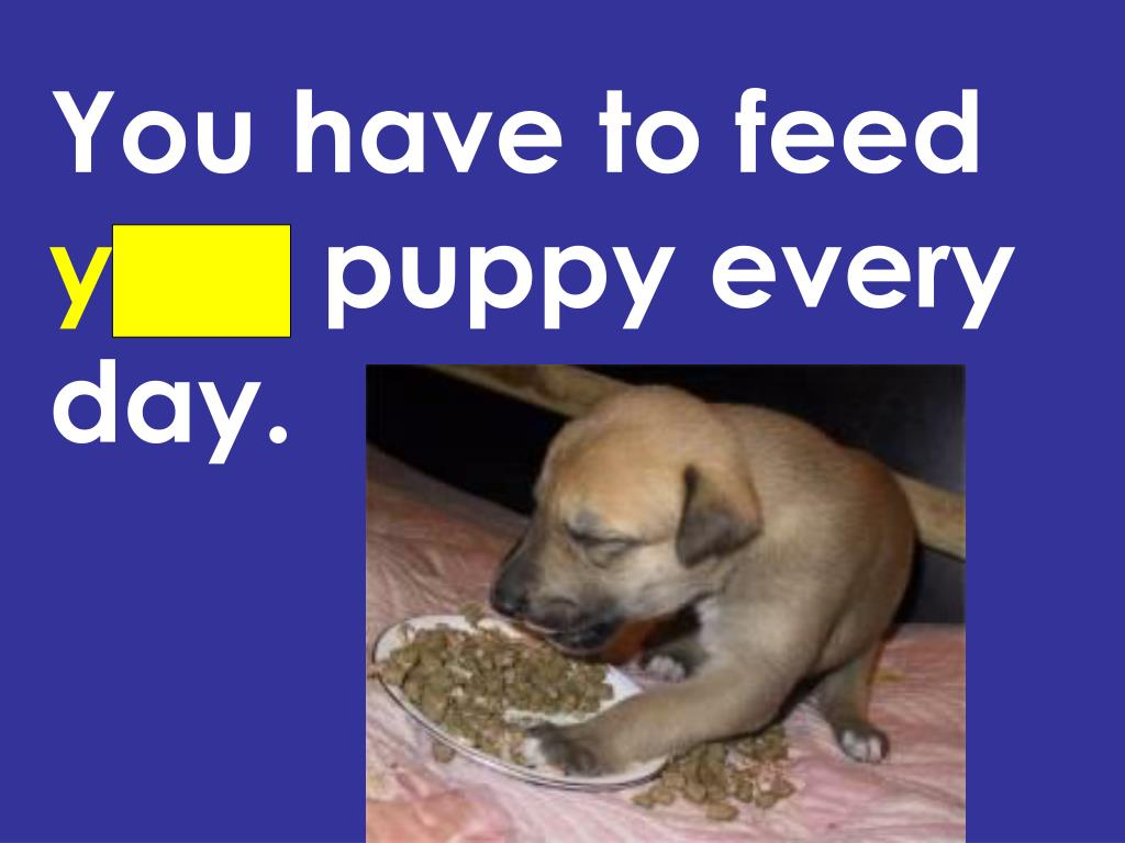 You have to feed
