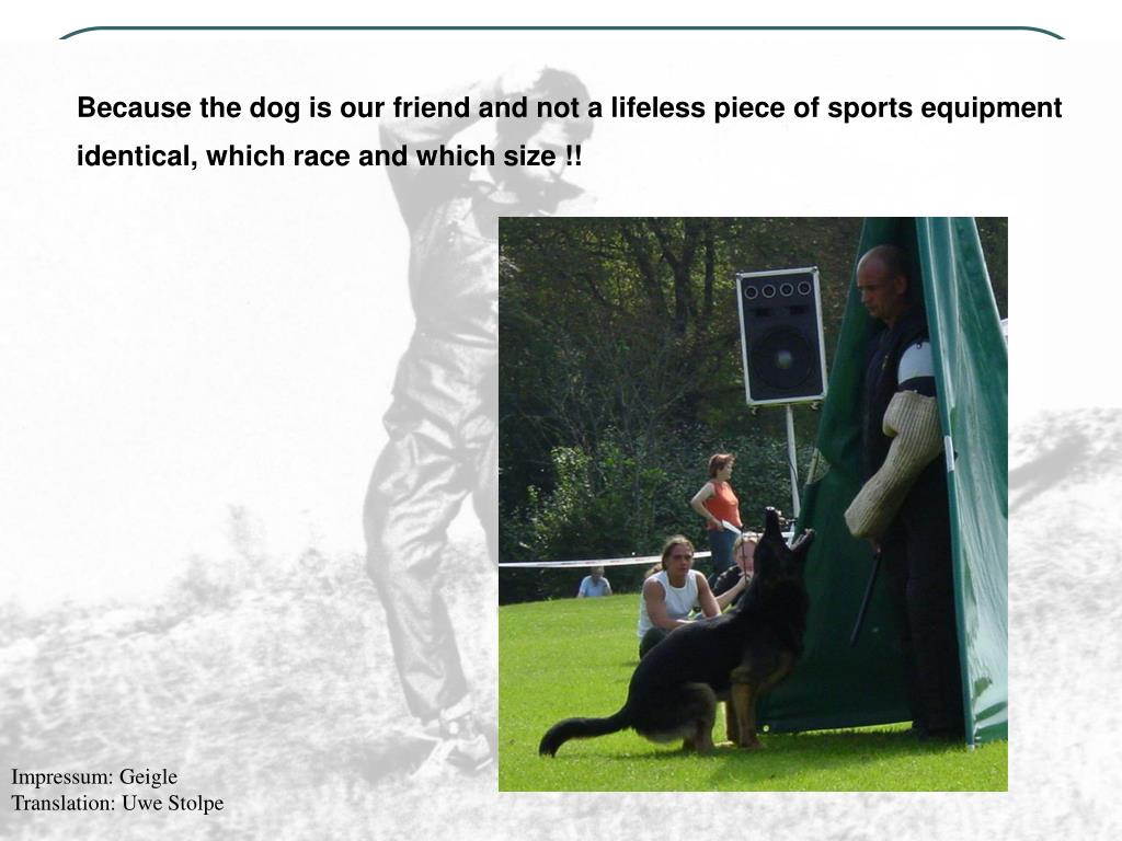 Because the dog is our friend and not a lifeless piece of sports equipment identical, which race and which size !!