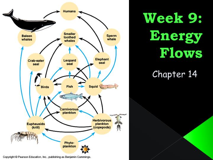 Week 9 energy flows