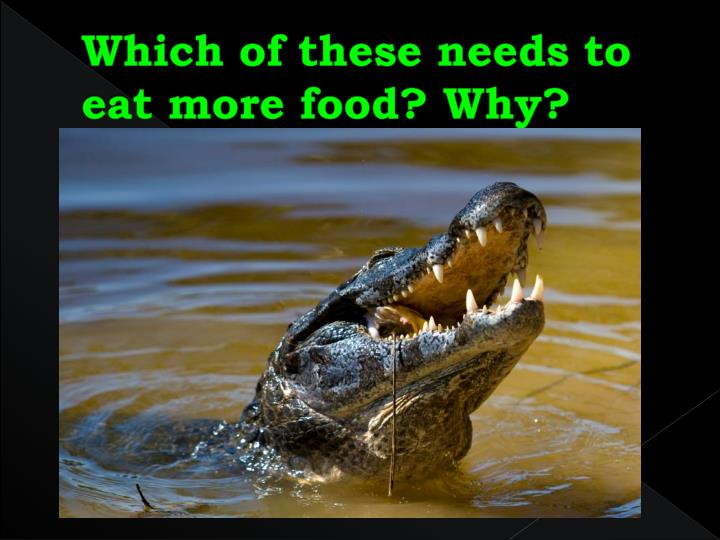 Which of these needs to eat more food? Why?