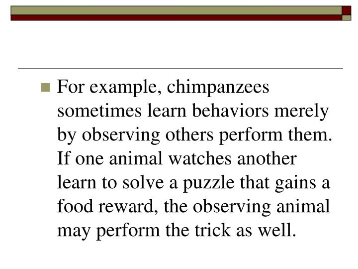 For example, chimpanzees sometimes learn behaviors merely by observing others perform them.  If one animal watches another learn to solve a puzzle that gains a food reward, the observing animal may perform the trick as well.