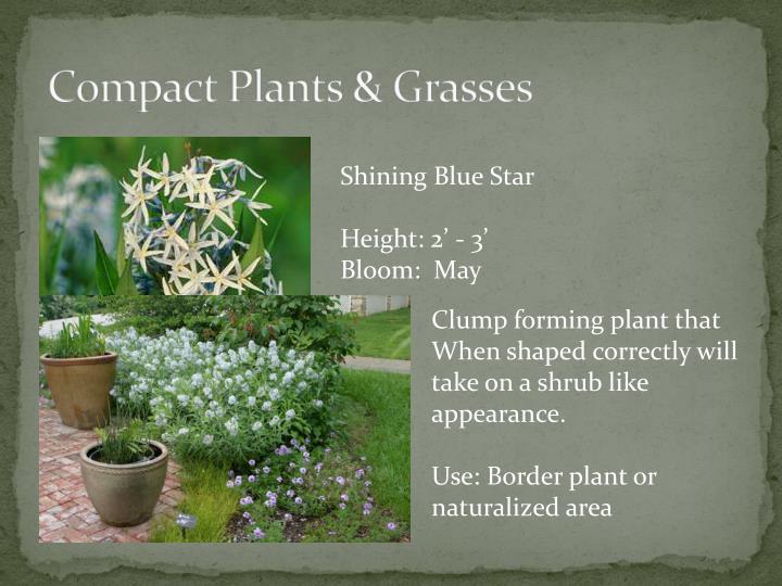 Compact Plants & Grasses
