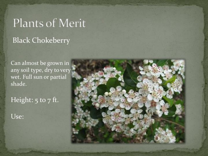 Plants of Merit