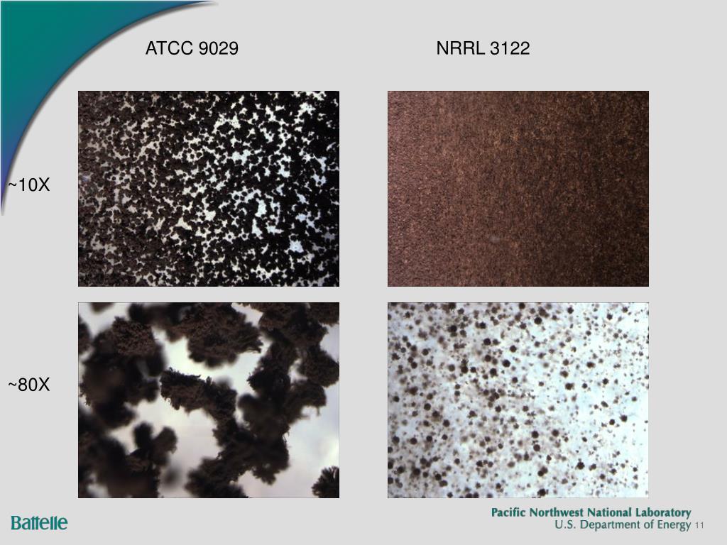 ATCC 9029NRRL 3122