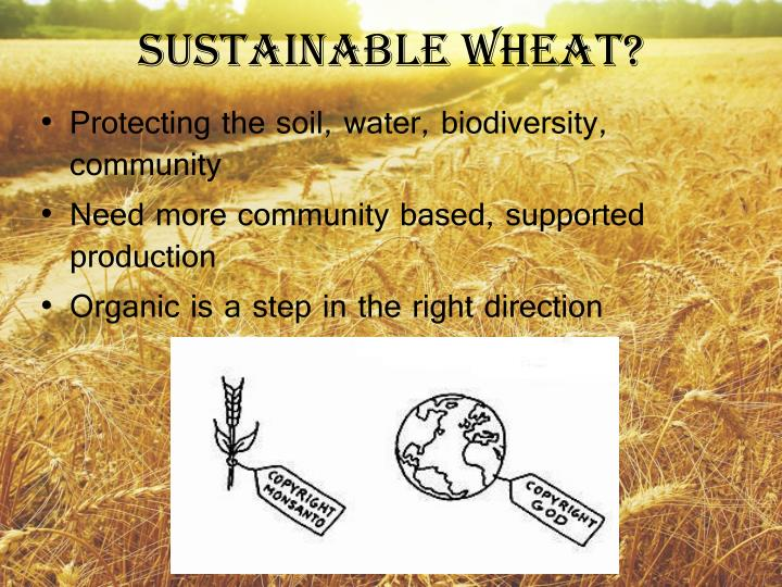 Sustainable Wheat?