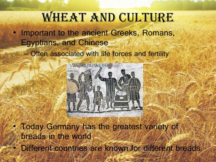 Wheat and Culture