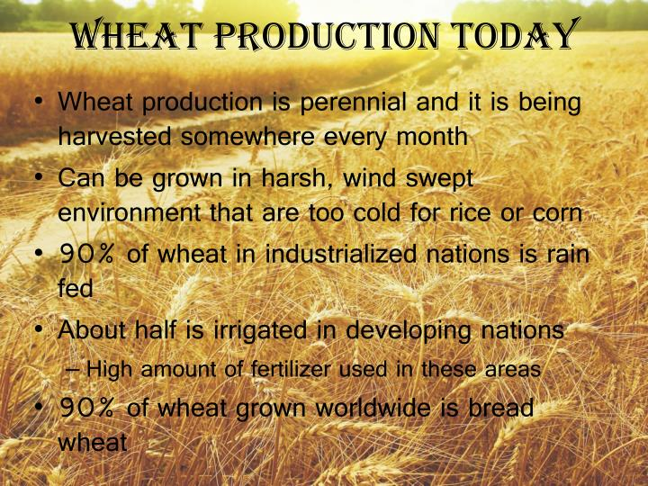Wheat Production Today
