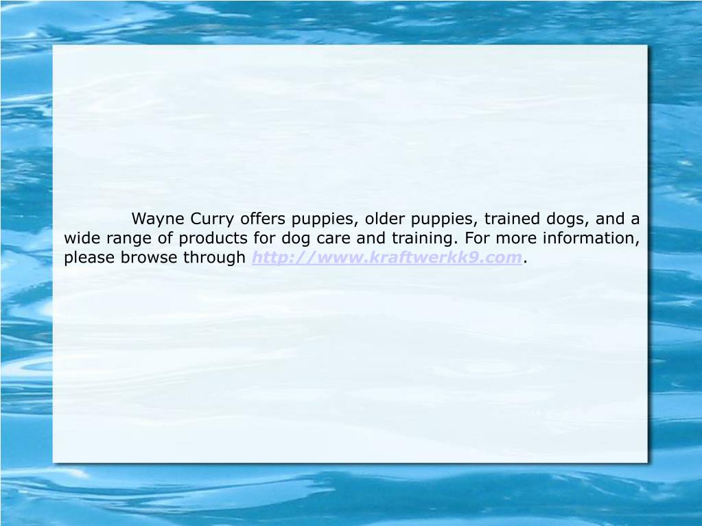 Wayne Curry offers puppies, older puppies, trained dogs, and a wide range of products for dog care and training. For more information, please browse through
