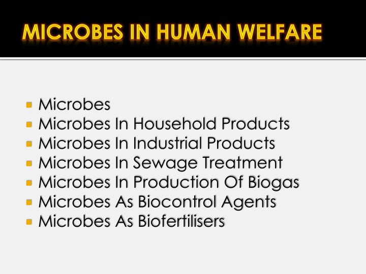 microbes and human life Microbes in the human body according to a recent national institutes of health   as a part of their natural life cycle, bacteria can transform into a variety of forms.