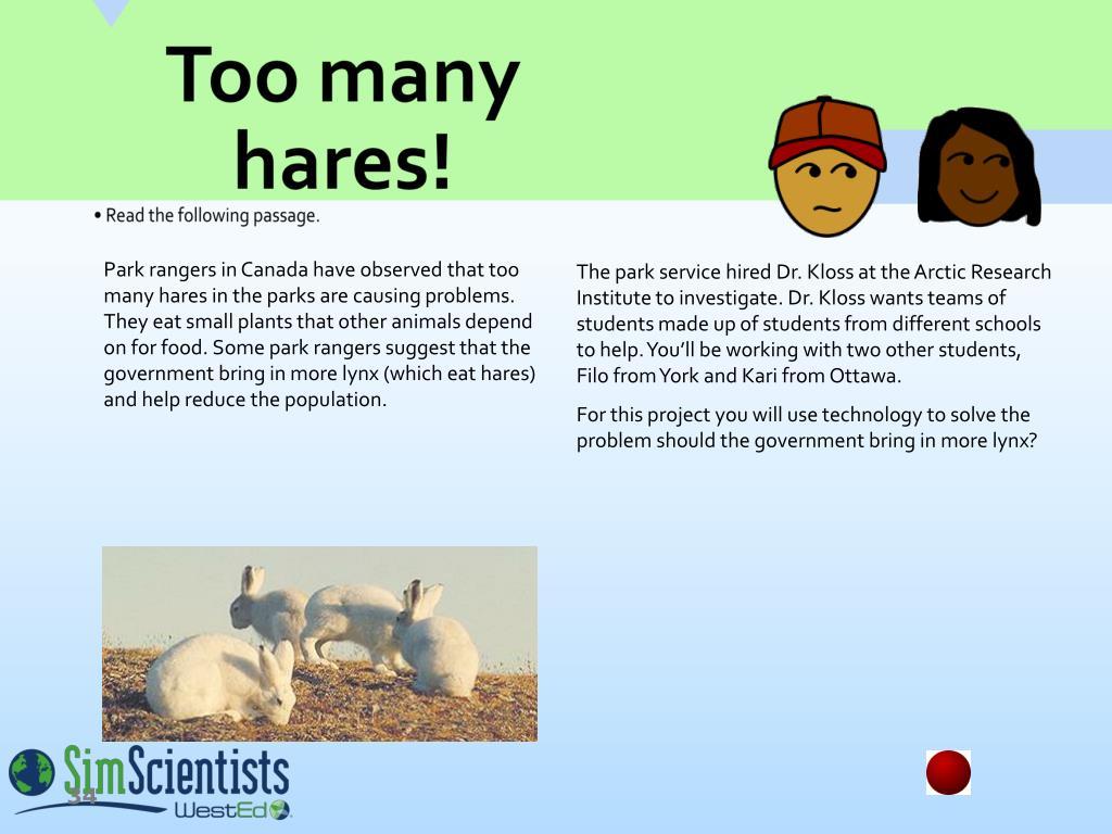 Too many hares!