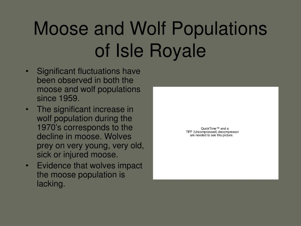 Moose and Wolf Populations of Isle Royale