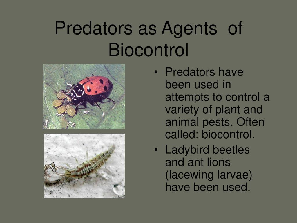 Predators as Agents  of Biocontrol