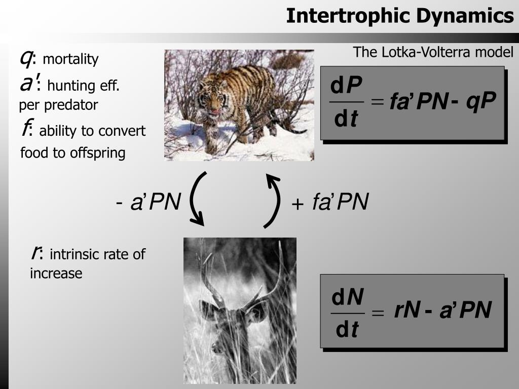 Intertrophic Dynamics