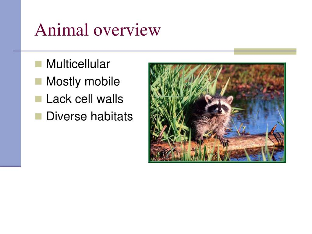 Animal overview
