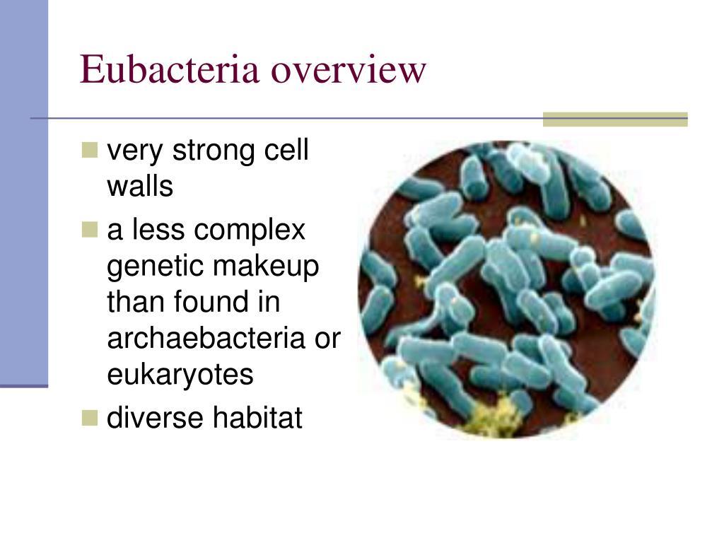 Eubacteria overview