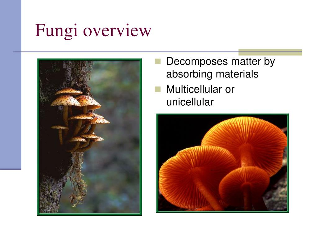 Fungi overview