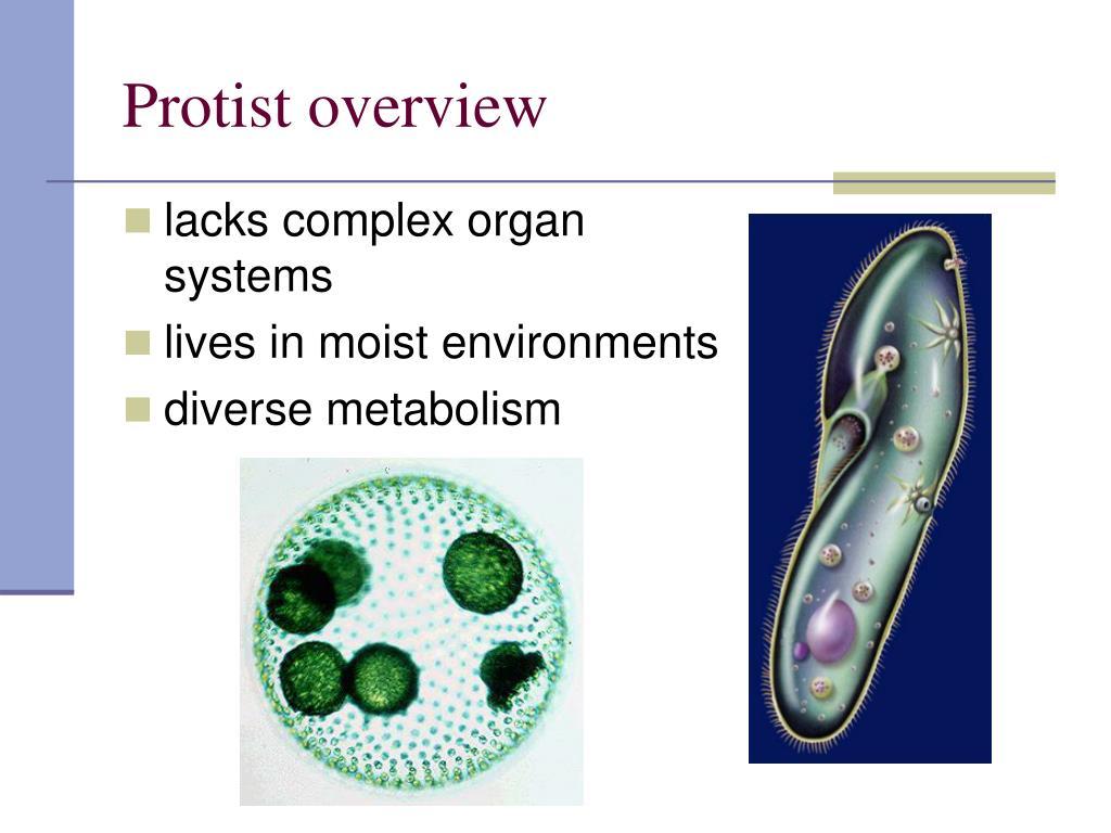 Protist overview