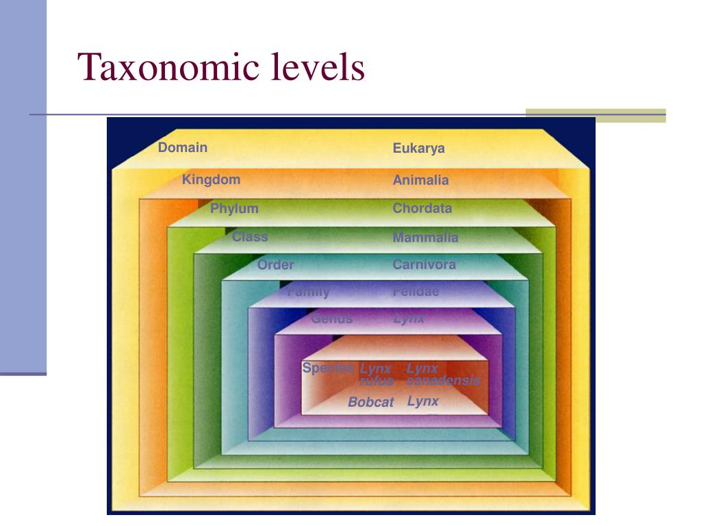 Taxonomic levels
