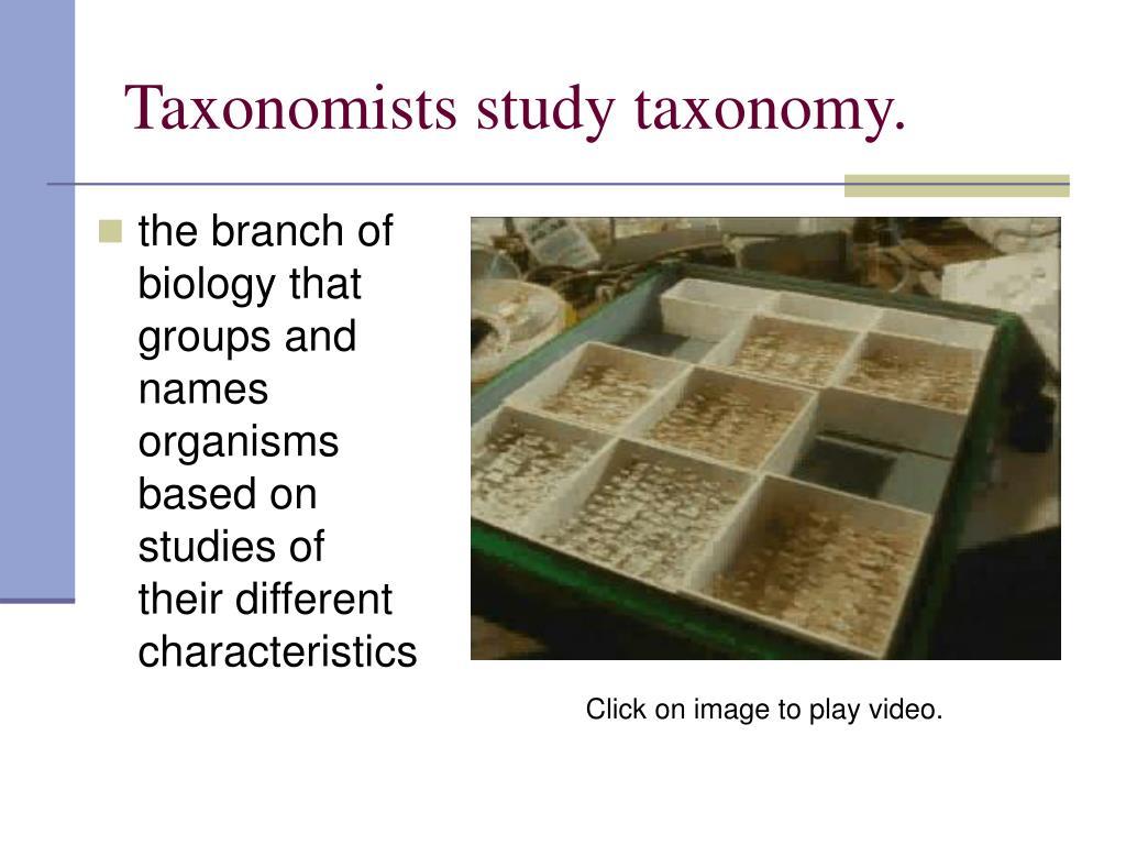 Taxonomists study taxonomy.
