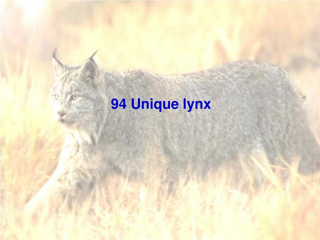 94 Unique lynx