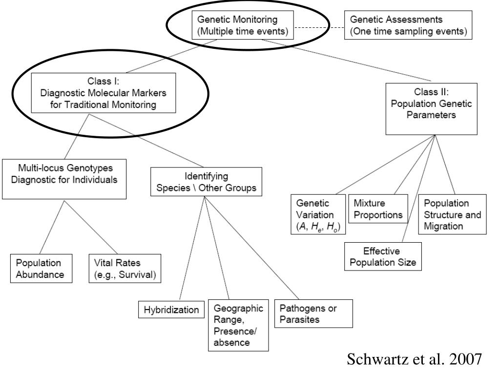 Schwartz et al. 2007