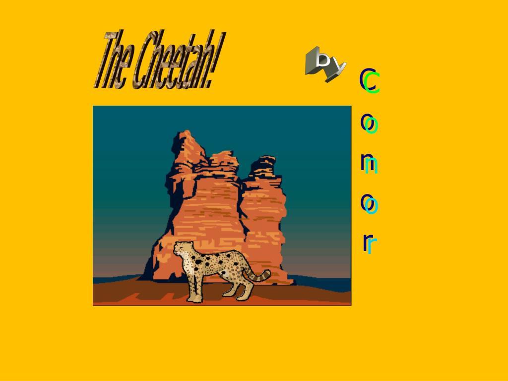 The Cheetah!