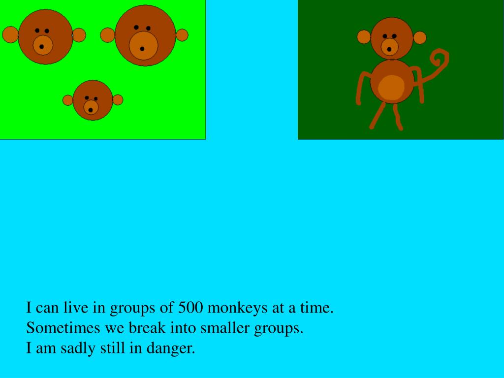I can live in groups of 500 monkeys at a time.