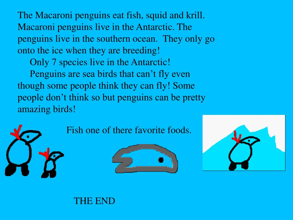 The Macaroni penguins eat fish, squid and krill.       Macaroni penguins live in the Antarctic. The penguins live in the southern ocean.  They only go onto the ice when they are breeding!