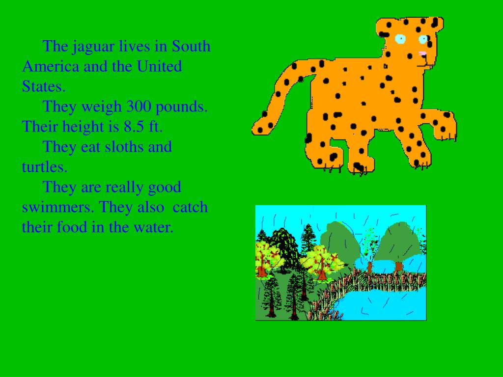 The jaguar lives in South America and the United States.