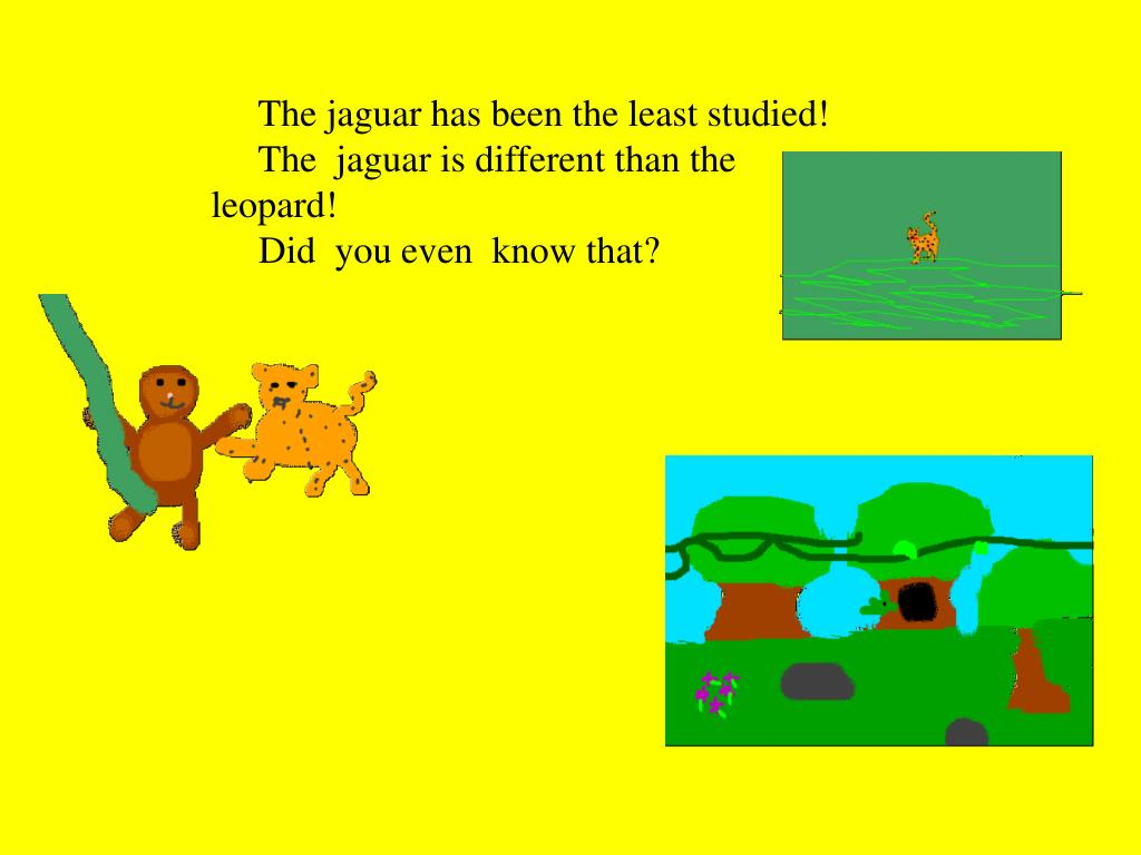 The jaguar has been the least studied!