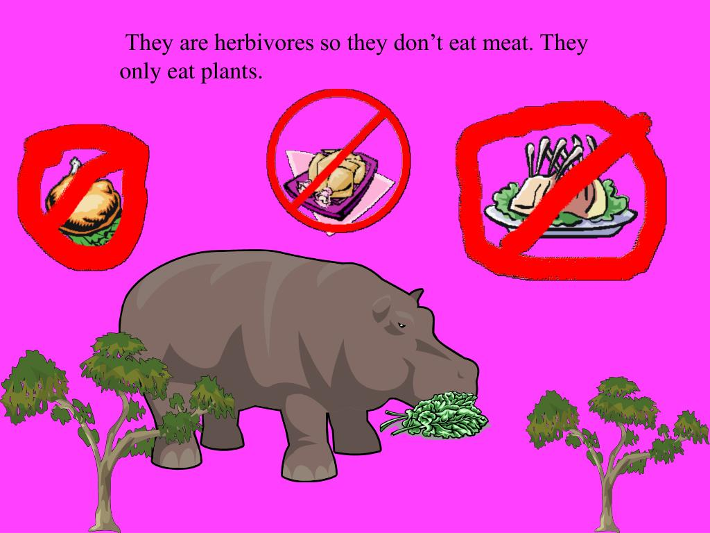 They are herbivores so they don't eat meat. They
