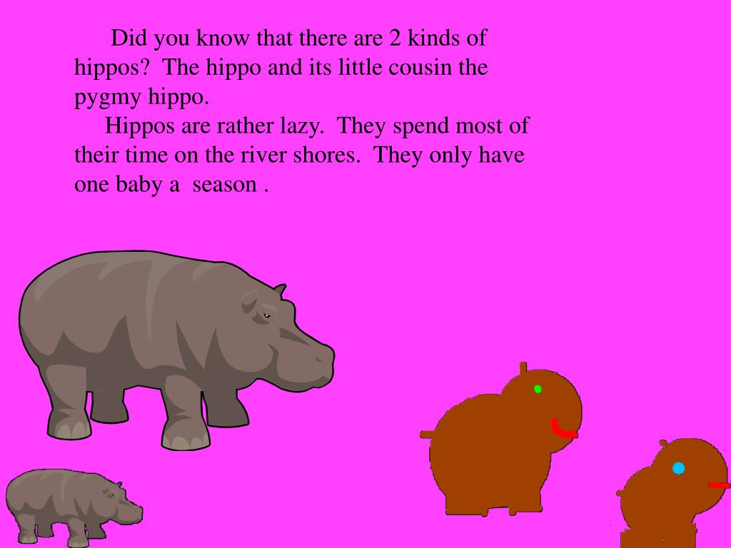 Did you know that there are 2 kinds of hippos?  The hippo and its little cousin the pygmy hippo.