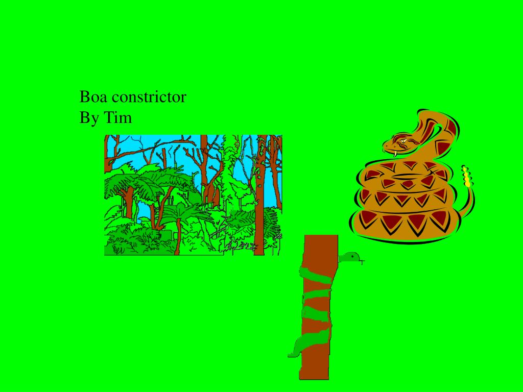 Boa constrictor                                                                                       By Tim
