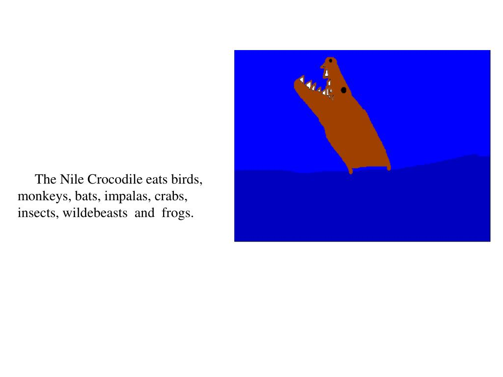 The Nile Crocodile eats birds, monkeys, bats, impalas, crabs, insects, wildebeasts  and  frogs.