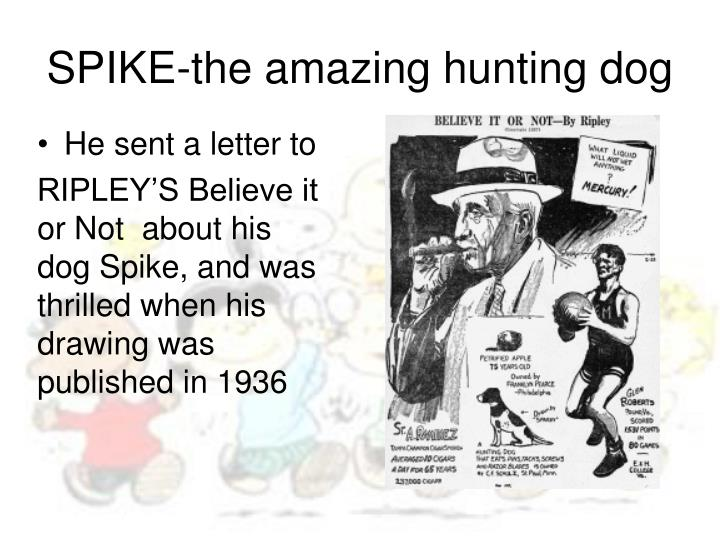 SPIKE-the amazing hunting dog