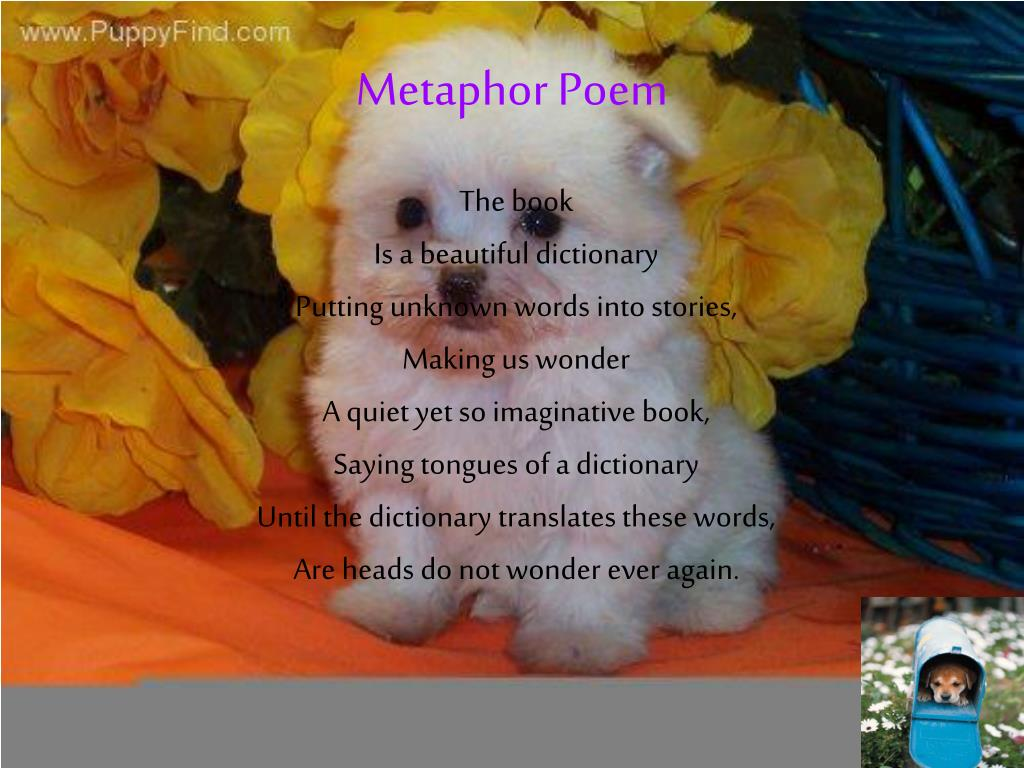 Metaphor Poem