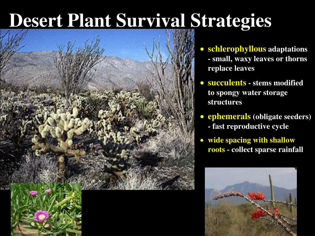 Desert Plant Survival Strategies