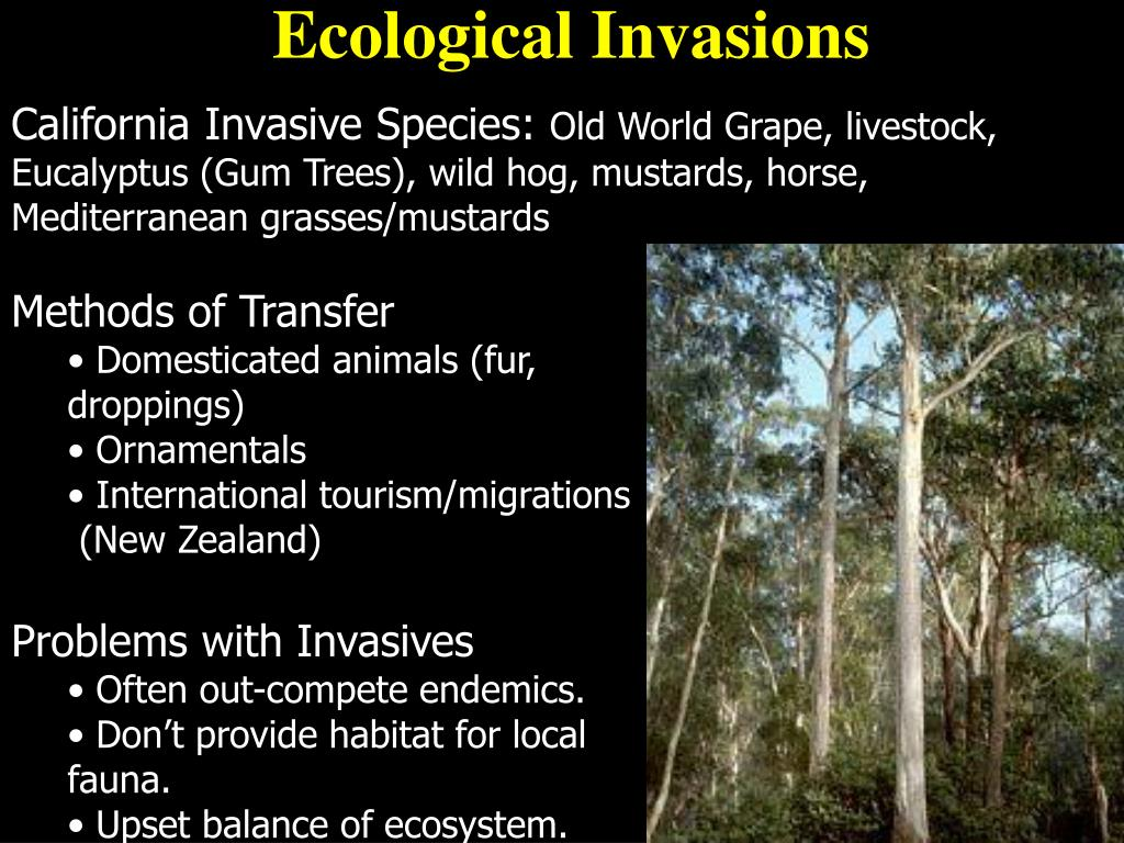 Ecological Invasions