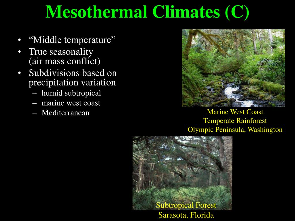 Subtropical Forest
