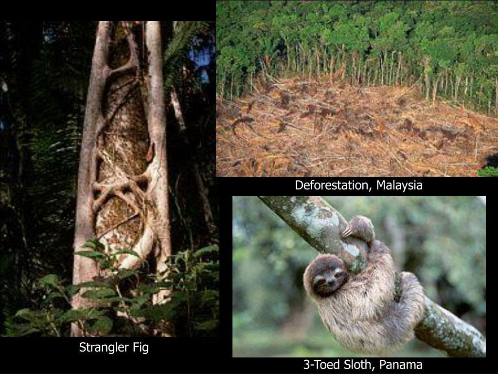Deforestation, Malaysia