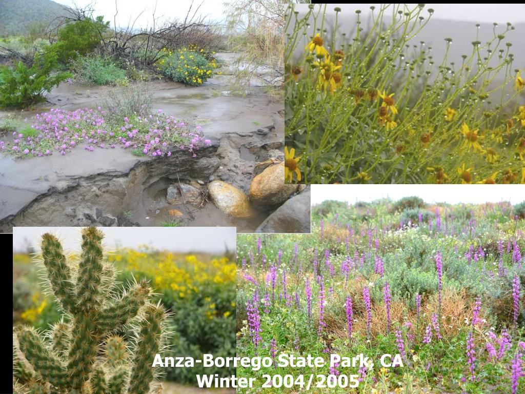 Anza-Borrego State Park, CA Winter 2004/2005