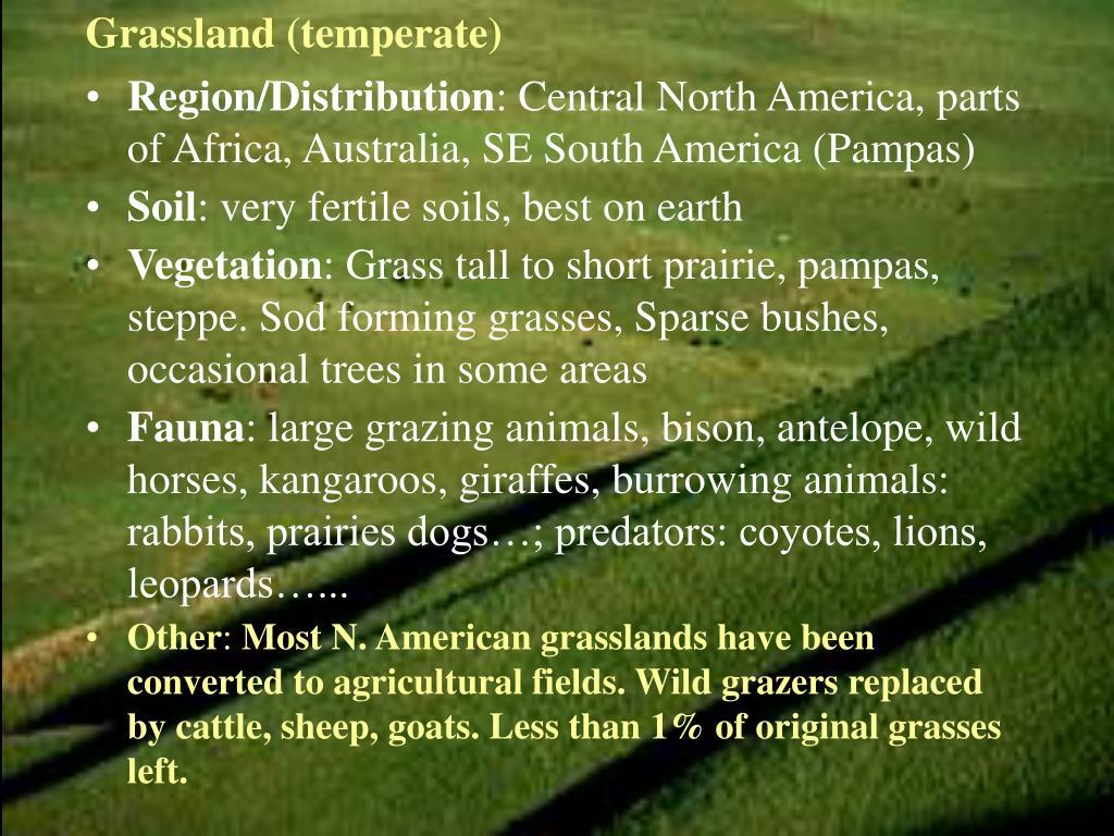 Grassland (temperate)