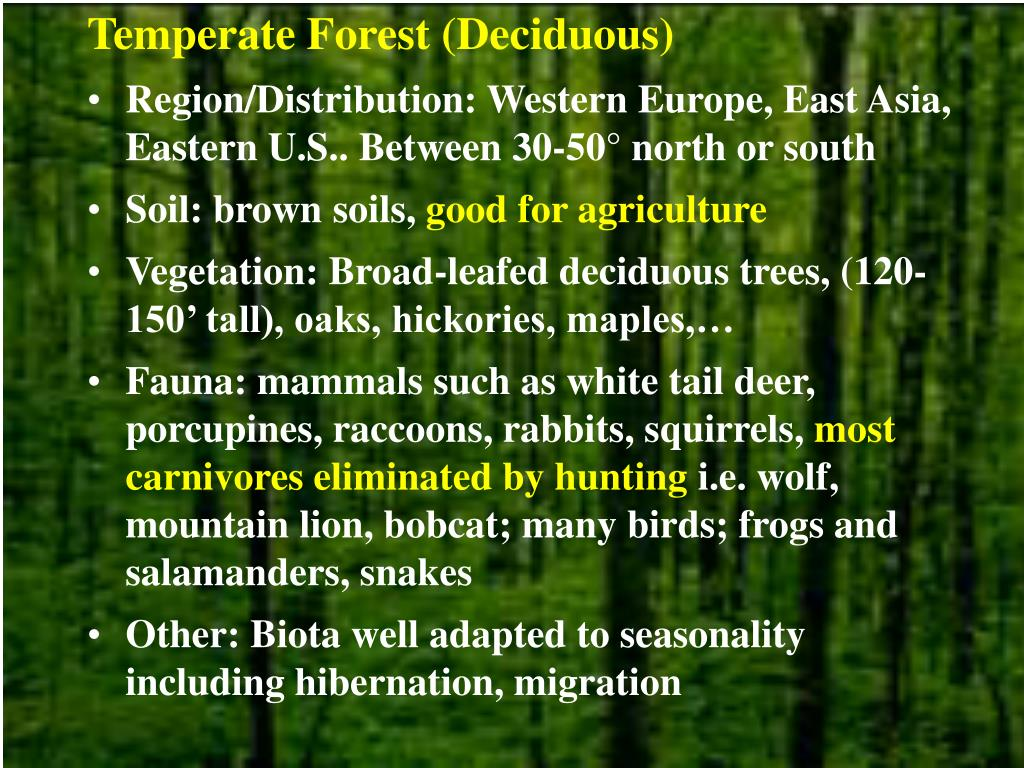 Temperate Forest (Deciduous)