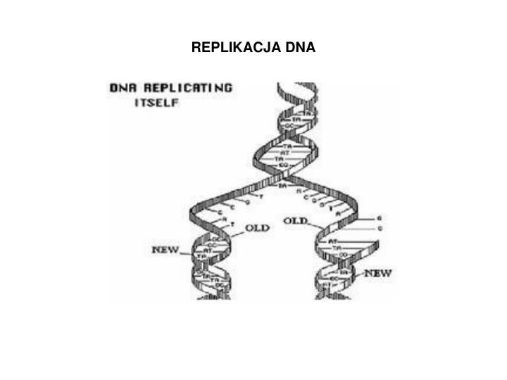 REPLIKACJA DNA