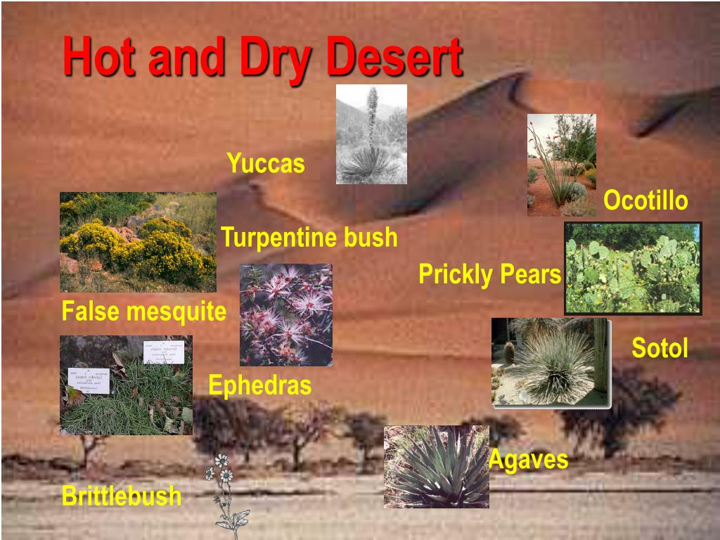 Hot and Dry Desert