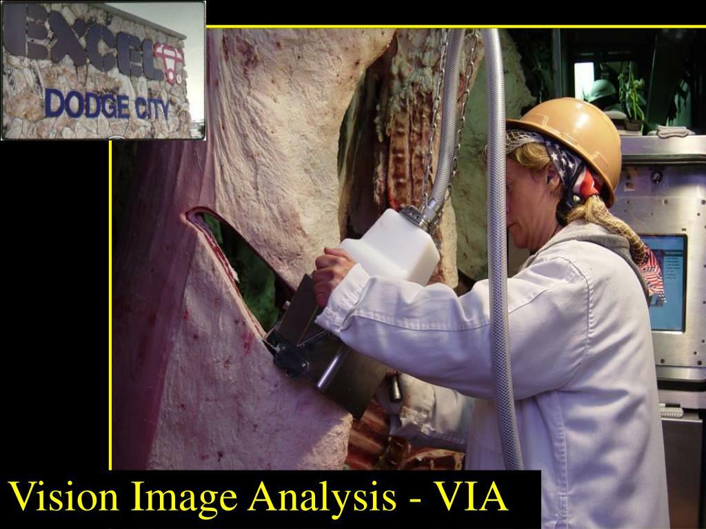Vision Image Analysis - VIA