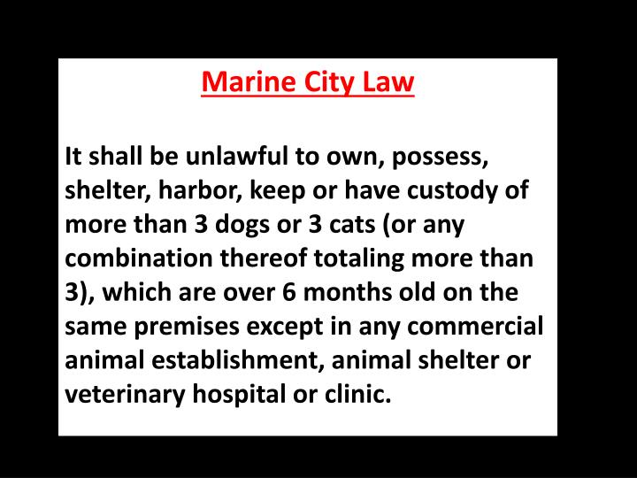 Marine City Law
